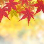 秋の味覚狩りの種類やシーズン大特集!必要なものも準備しよう